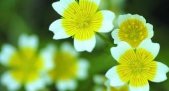 LA-PRIMAVERA-flores